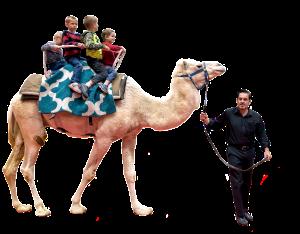 Camels2014_3